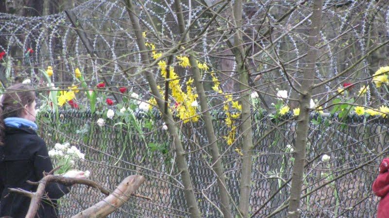 Hekbloemen Kamp van Zeist